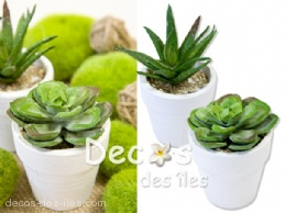 Succulentes pot en lot de 2